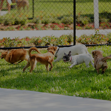 Large Dog Park at Cresthaven Apartments